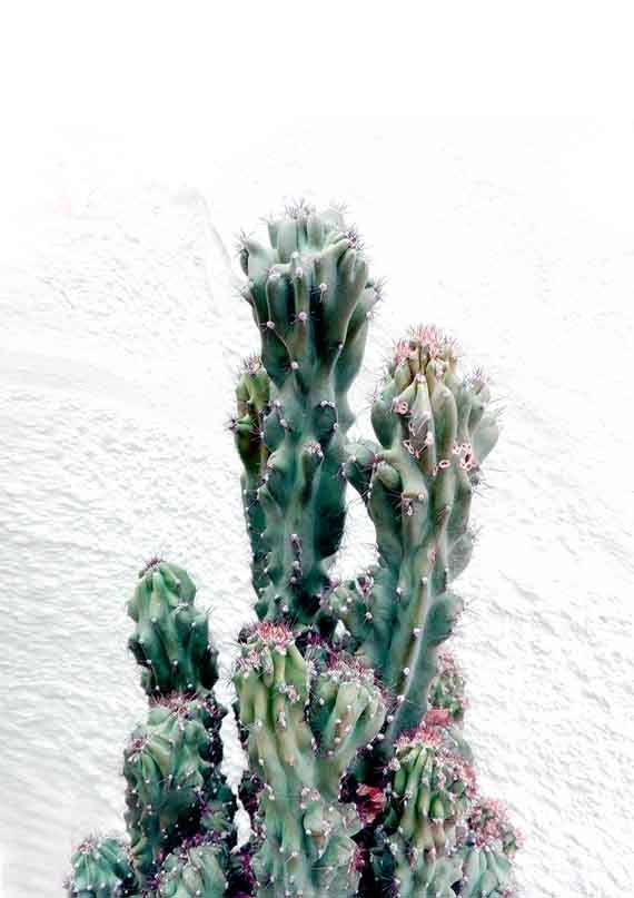 Cactus Photography, Cactus Poster, Cacti Wall Art, Southwestern Art Prints, Modern Boho Decor, Cactus Botanical Print, Digital Download Art  ❗️PLEASE NOTE, THIS IS A DIGITAL DOWNLOAD ITEM. No physical item will be shipped.  ♥ Enjoy 30% saving when you purchase 3 or more prints, enter code SAVE30 at checkout.  ✅ If you need a specific size, please send me a message and I will gladly do it for you :) There is no extra cost!  -----------------------------------  YOU WILL RECEIVE  -----------...