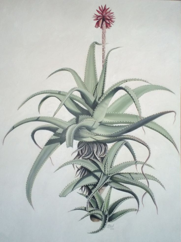 Aloe Arborescens ~ Block Mounted Oil Painting by Dawn Du Preez #DawnDuPreez