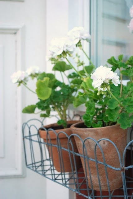 geraniums in a wire window box ~ perfection - Jardinière