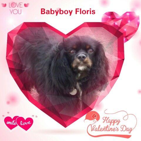 Happy  Valentine  Babyboy   Floris