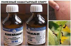 А  вы знали что нашатырный спирт прекрасно справляется с насекомыми,  вредителями и помогает комнатным растениям? Он может вернуть пяточкам  детскую мягкость, а так же отлично отмыть ваши окна и отбе…