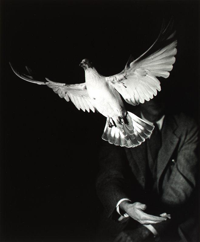 Harold Edgerton (Rising Dove, 1934)