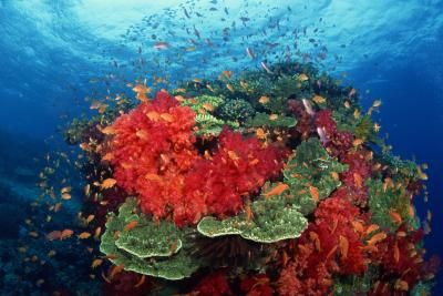 The islands of Tahiti, also known as French Polynesia, are a paradise for snorkeling and scuba diving. Located in the warm waters of the South Pacific, their turquoise lagoons host hundreds of ...