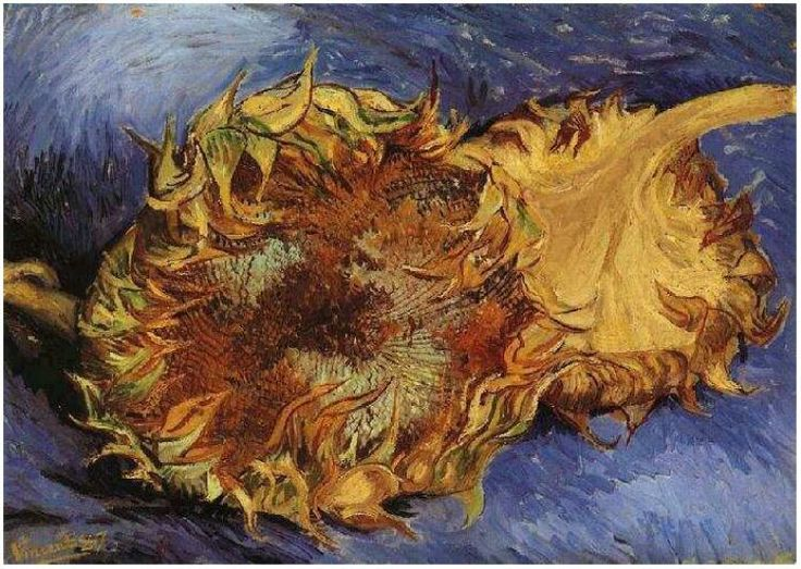 Van Gogh began painting sunflowers after he left Holland for France in pursuit of creating an artistic community. The firsts were created to decorate his friend Paul Gauguin's bedroom. The majority of Van Gogh's sunflowers in vases were created in Arles, France during 1888-1889. Van Gogh did create some sunflower paintings prior to this time though in Paris, France around the time of 1887. This series consists of sunflower clippings verses sunflowers in vases.