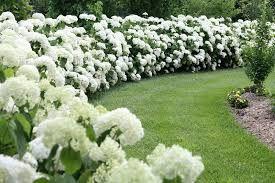 Afbeeldingsresultaat voor hortensia border