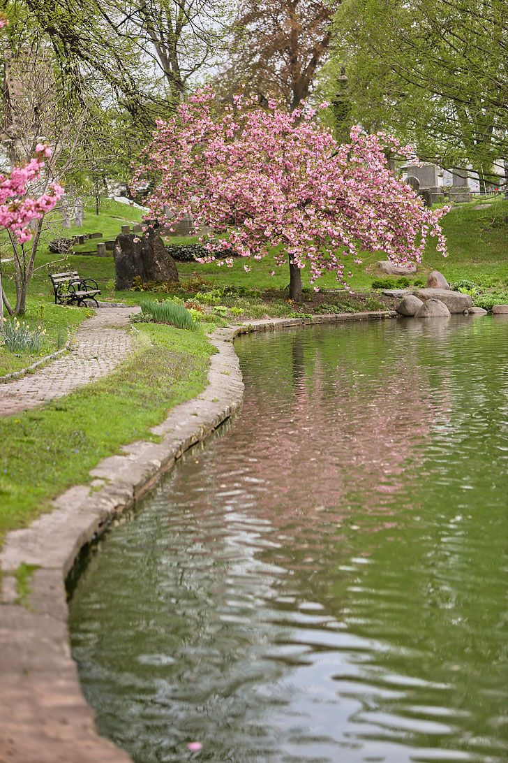 Best Places To See Cherry Blossoms In Nyc Spring Landscape Photography Spring Landscape Beautiful Landscape Wallpaper