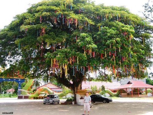 Les 58 meilleures images du tableau arbre a souhaits voeux sur pinterest souhait aupr s de - L arbre a souhait ...