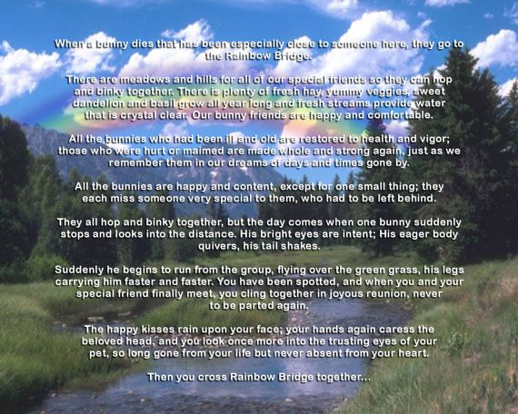 Rainbow Bridge Memorial Stone : Best in memory images on pinterest my heart proverbs