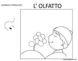 olfatto3