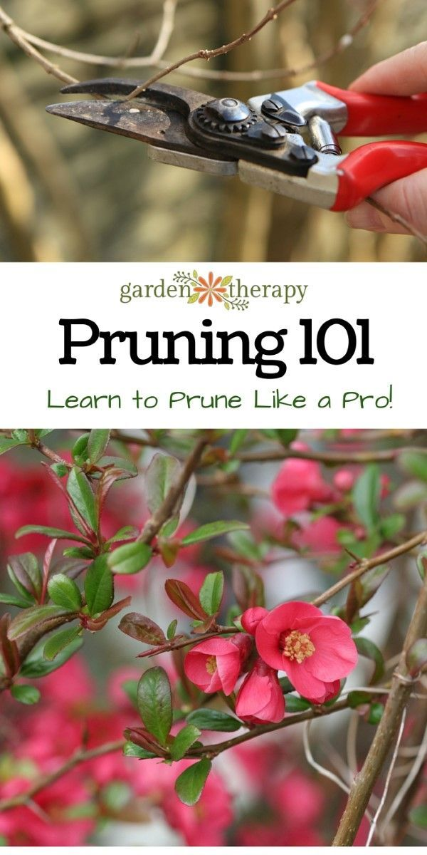 How to Prune like a Pro - demystifying pruning by starting with the basics #pruning #garden #gardencare #gardening