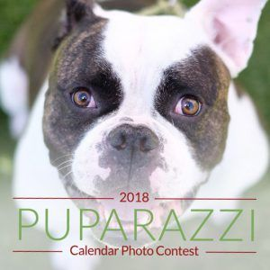 Our Puparazzi contest is ending tomorrow! Cast your votes pronto! https://www.gogophotocontest.com/forte  #photocontest #calendar