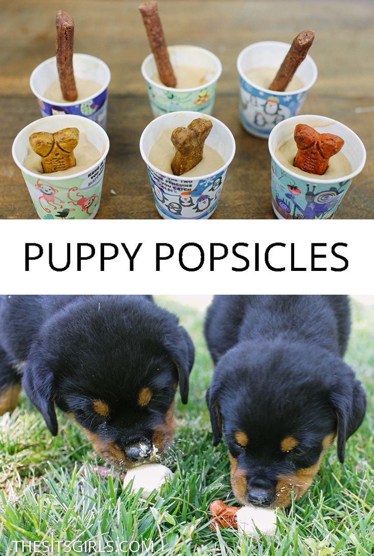 Popsicles aren't just for humans! Your puppy will love cooling down with a homemade dog treat. Make your own puppy popsicles…