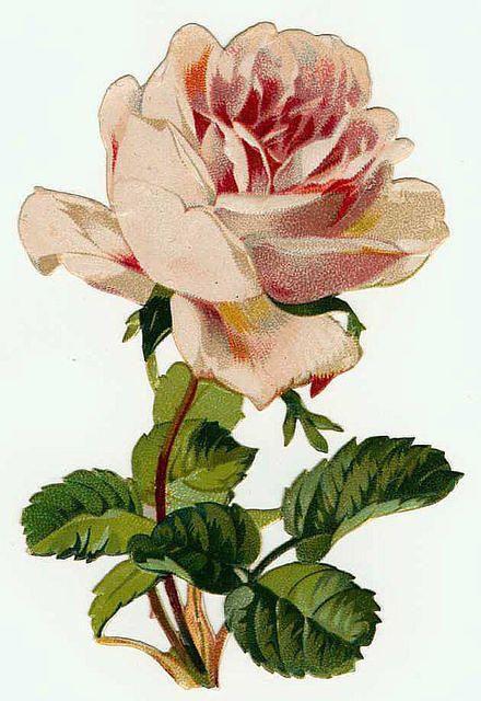 Soft pink rose:    http://lilac-n-lavender.blogspot.com/2012/02/pink-roses-french-vanilla.html