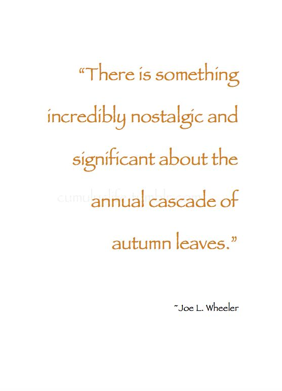 "~ Autumn ~ ""There is something incredibly nostalgic and significant about the annual cascade of autumn leaves.""~ Joe L. Wheeler #Quote"
