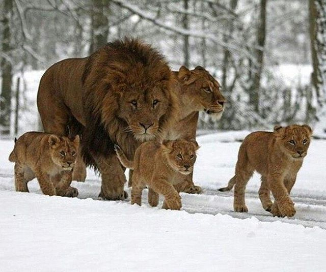 Family Portrait    Photo by © I. Turner #Destination_wild
