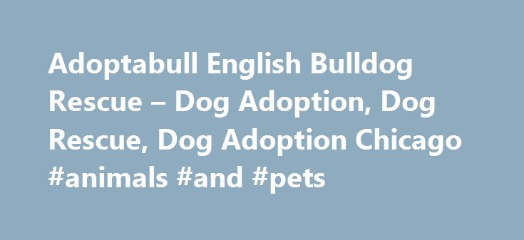 Adoptabull English Bulldog Rescue – Dog Adoption, Dog Rescue, Dog Adoption Chicago #animals #and #pets http://pet.remmont.com/adoptabull-english-bulldog-rescue-dog-adoption-dog-rescue-dog-adoption-chicago-animals-and-pets/  Welcome to adoptaBull English Bulldog Rescue! We want to send a HUGE thank you to everyone that participated in our 2016 Labor Day Telethon and helped us exceed our initial goal and achieve a new record for this annual event. This is a significant boost for our Medical…