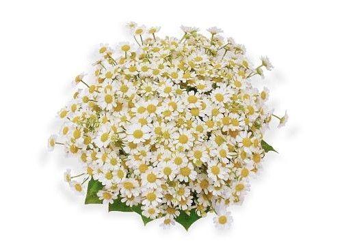 Svatební kytice kopretiny