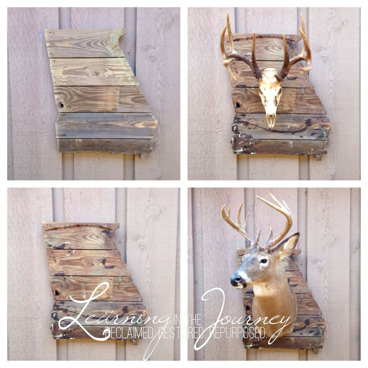 projects ideas dear head. A  Georgia On My Mind deer mounting or any item plaque custom built birthday present for my brother 301 best Taxidermy Ideas images on Pinterest Deer