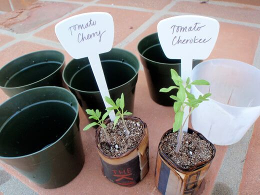 Start with clean pots and sterile potting mix