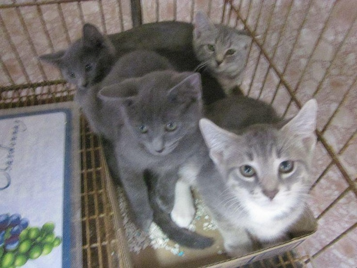 MANY KITTENS HERE! NEED ADOPT FOSTER RESCUE! Kittens at ...