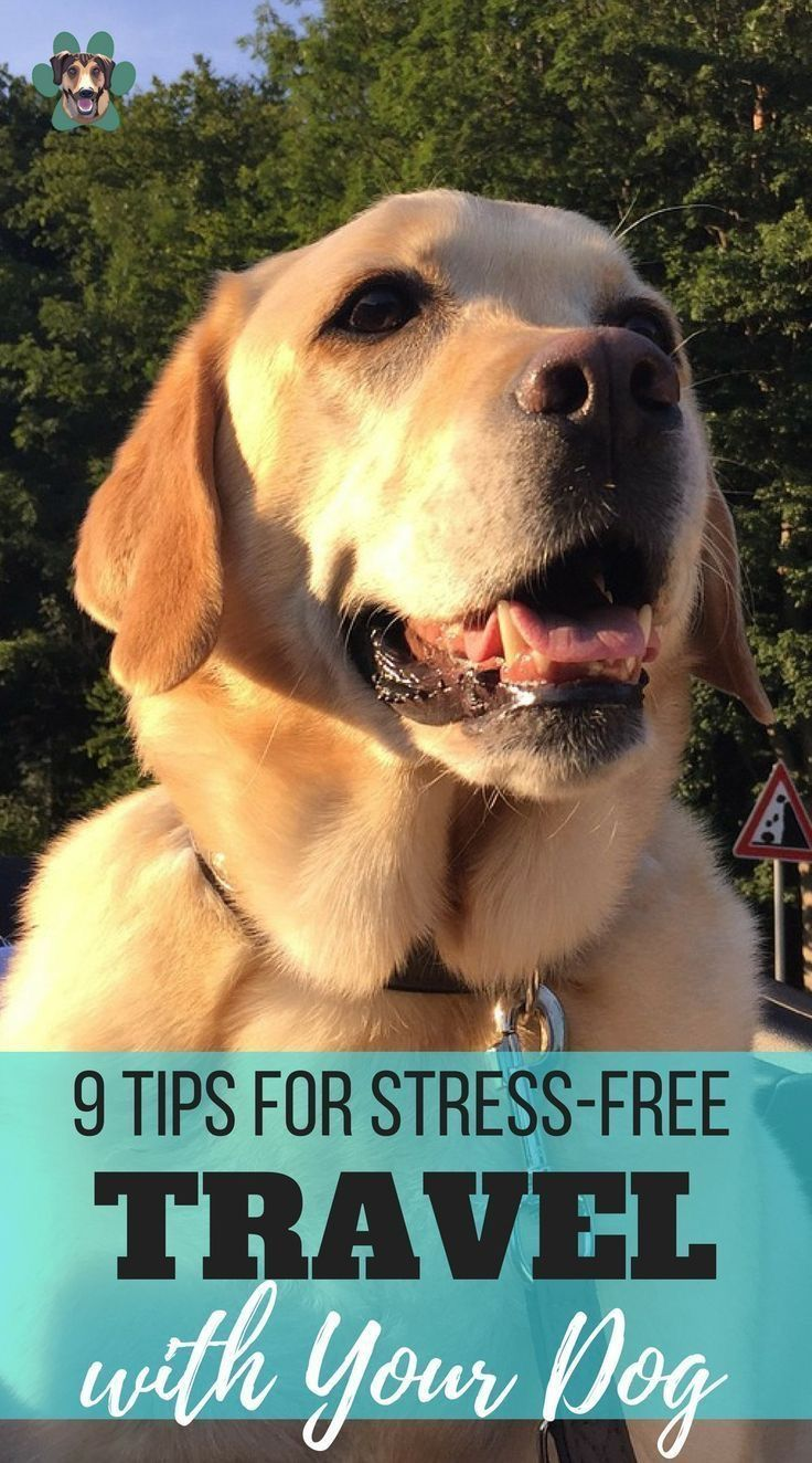 Pin On Brain Training For Your Dog