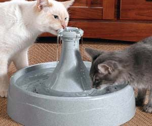 Your cat only drinks running water because he has discerning tastes. Water that has been sitting around gets stale and gross - why would a refined kitty stoop so low? Make sure that your cat is taken care of with this drinking fountain — it will please his kitty sensibilities. Buy It $41.77 via Amazon.com