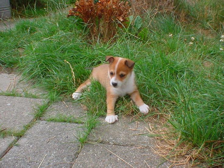 Keeza's Lunde Kraka Ylva as a pup