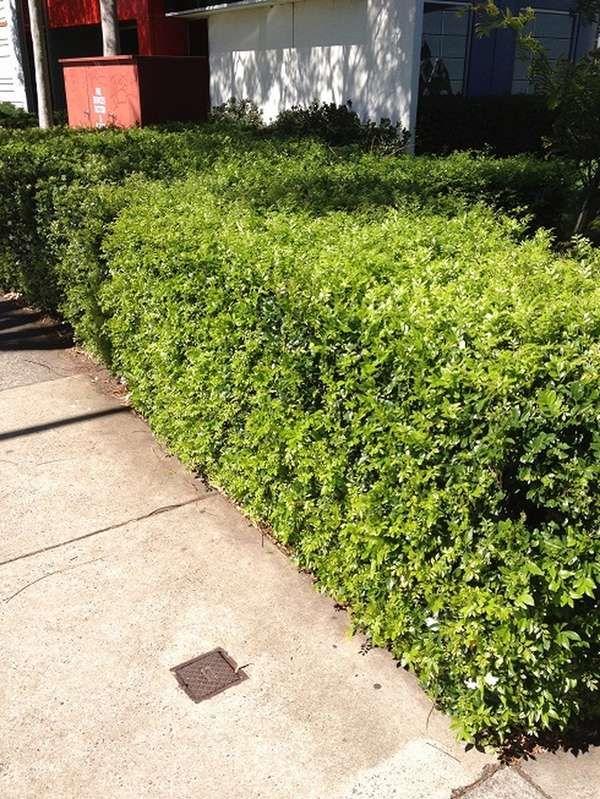 Example of put option hedging nurseries