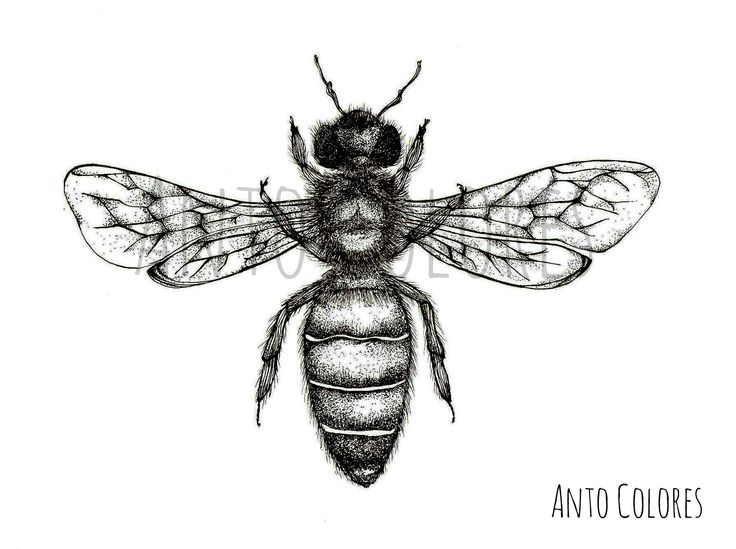 #bee #abeja #ilustracion #illustration #antocolores  www.instagram.com/anto.colores https://www.facebook.com/AntoColores/?ref=aymt_homepage_panel