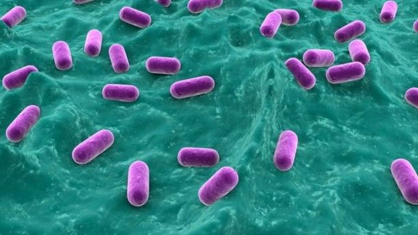 Probiotic potential: Study unlocks how friendly bacteria may help battle foodborne illnesses