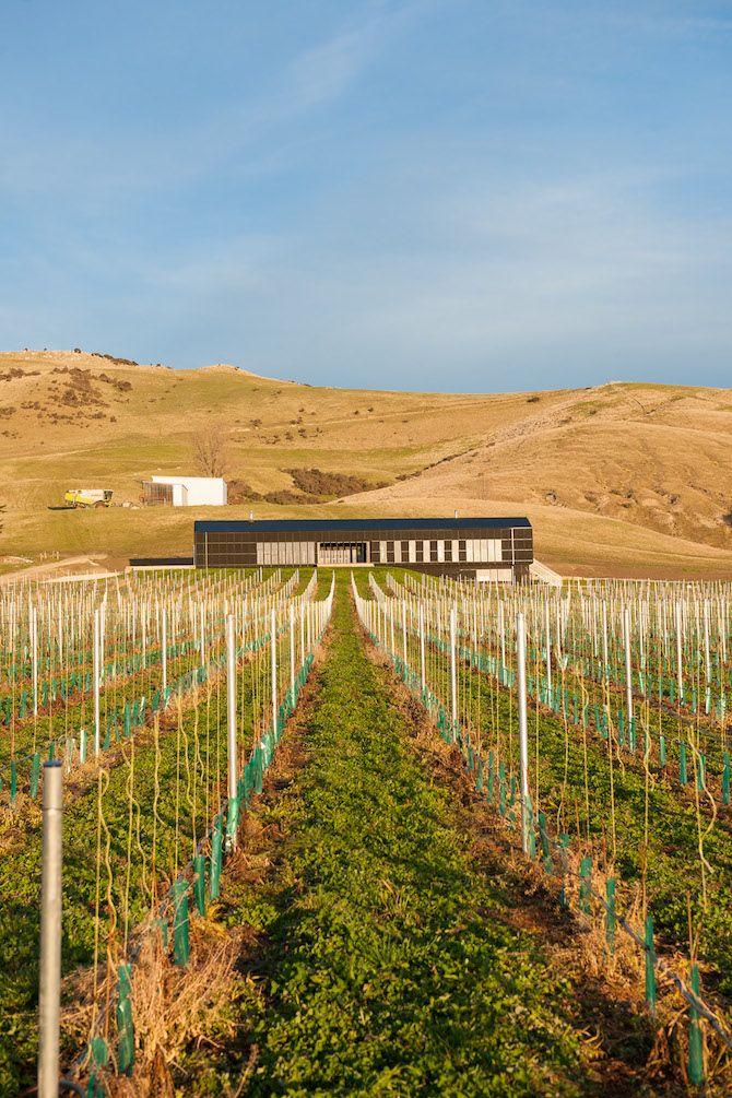 RTA Studio: Black Estate Winery - Thisispaper Magazine