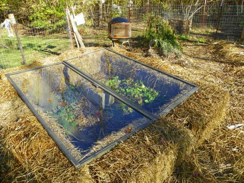 Straw Bale & Glass Cold Frame - To keep growing in winter weather, consider this low cost clever idea. Insulate your garden with straw or hay bales & cover with glass (in this case old sliding doors) to retain heat. Some ventilation during warmer days would be necessary. Also a pest + animal deterrent. Caution around kids though! | The Micro Gardener