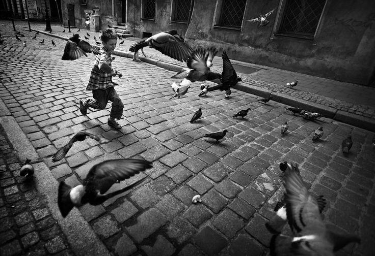 doves Photo by Monika Strzelecka -- National Geographic Your Shot