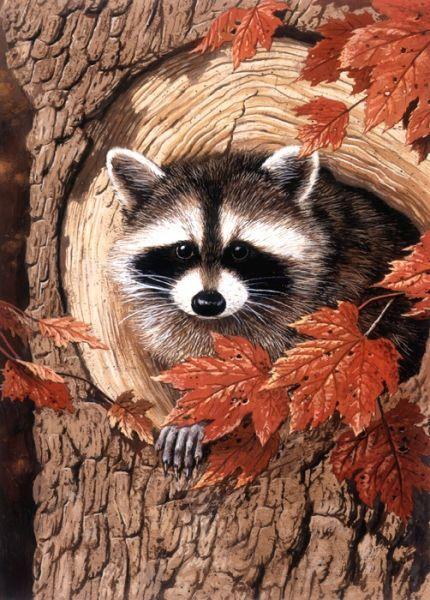 Raccoon ~ by William Vanderdasson