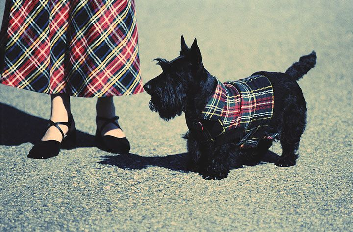 Scottish Tartan for Women   Woman and Scottish terrier wearing tartan - Getty