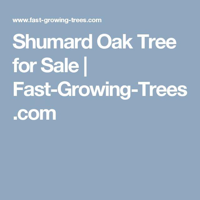 Shumard Oak Tree for Sale | Fast-Growing-Trees.com