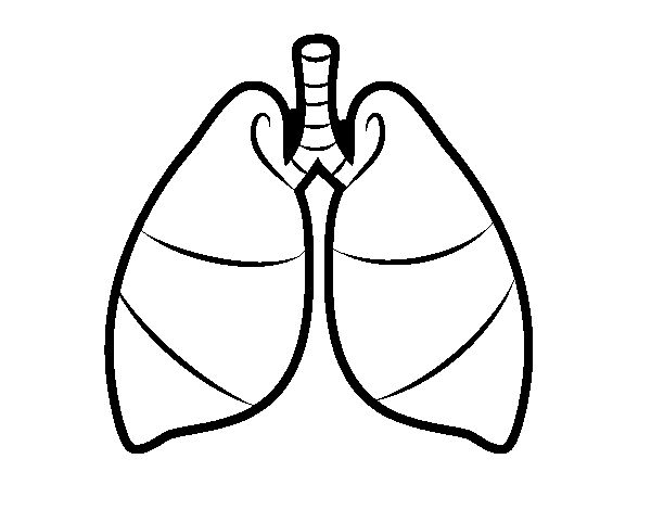 free human heart and lungs coloring pages