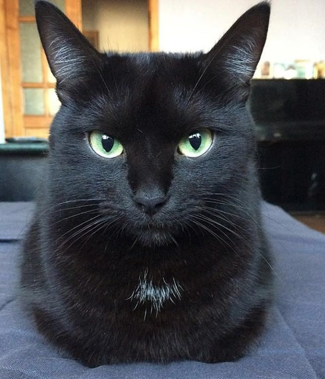 65 Names For Black Cats With Green Eyes Names For Black Cats Black Cat Breeds Black Cat Pictures