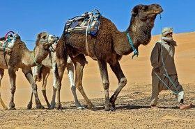 vente de Photographiess du désert