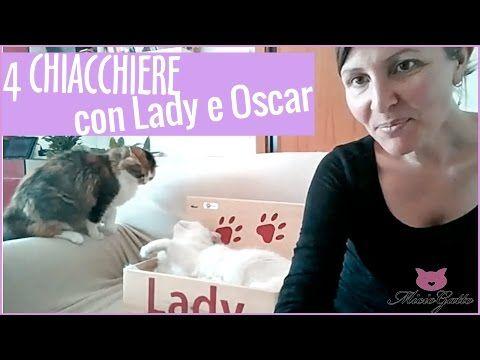 VLOG ** Alimentazione del gatto: da una diretta Facebook *** - YouTube