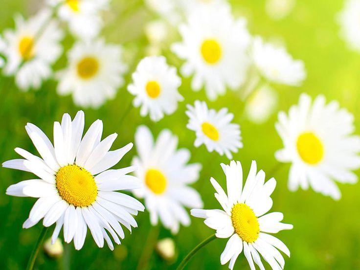 35 best spring images on pinterest hello spring spring