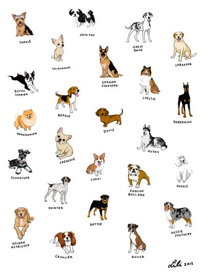 Cat And Dog Breeds Starting With B