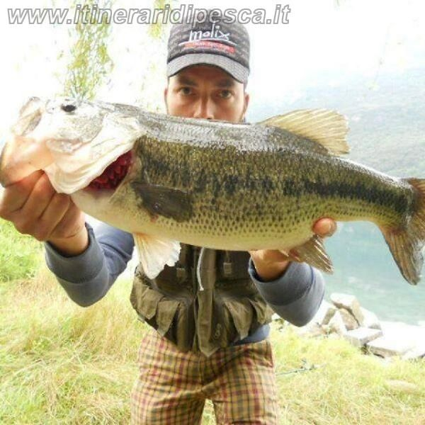 Lago di Mergozzo - Black bass con spinner bait pesca fishing