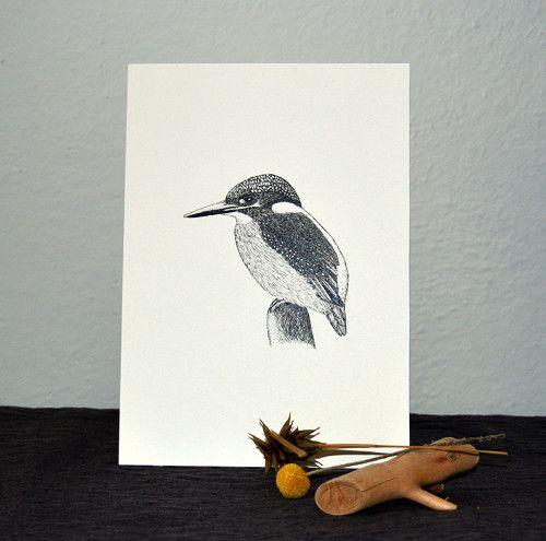 Kingfisher - Ledňáček