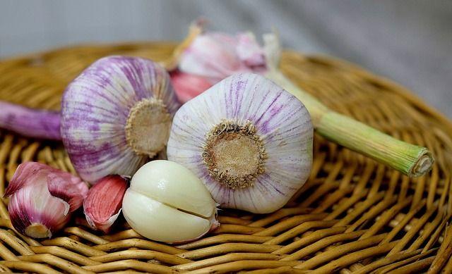 Pestovanie cesnaku - Ako pestovať cesnak?
