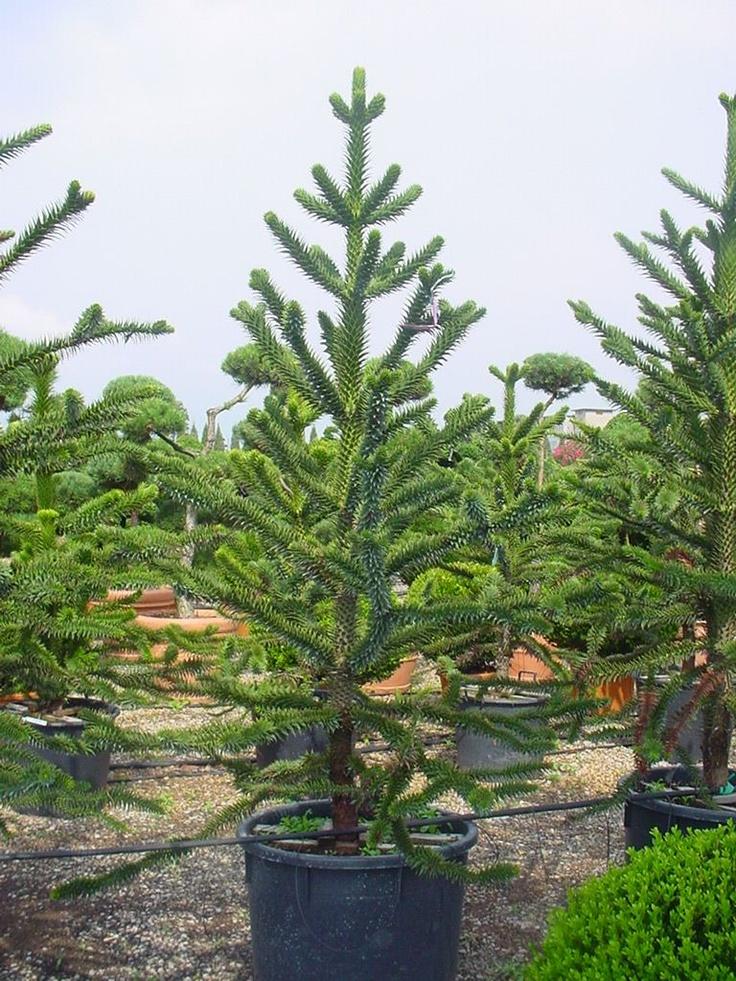 8 besten Exklusive und mediterrane Gartenpflanzen Bilder auf - gartenpflanzen
