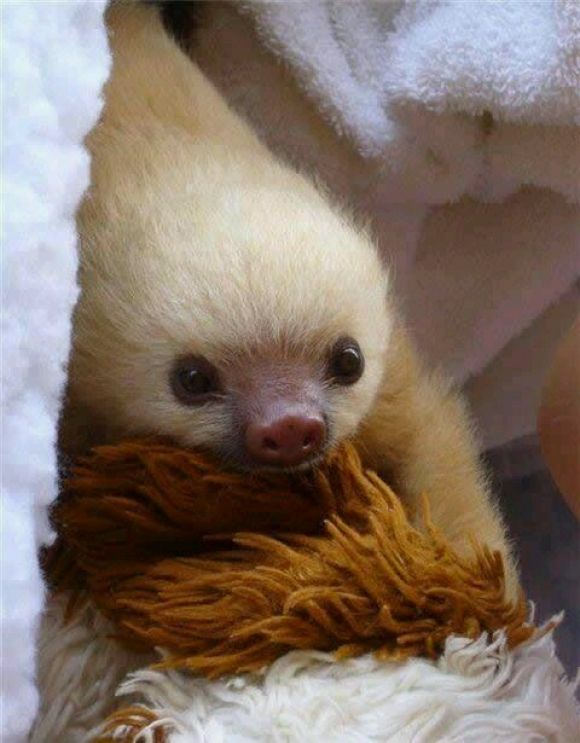 Just A Blonde Sloth | Cutest Paw