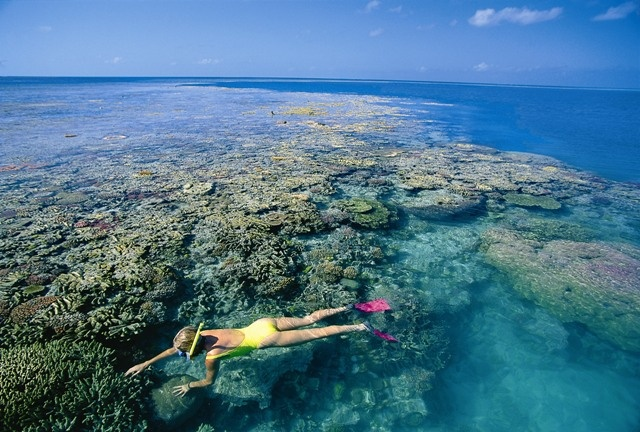 Snorkeling on the Great Barrier Reef-got to do this everyday when working as a dive-master/snorkeling guide out of Port Douglas.