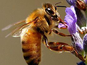 Kısa kısa: Taşınan Arılar Video