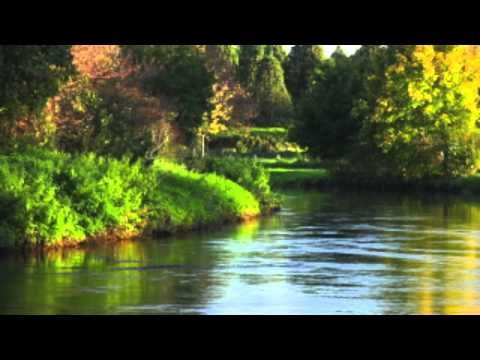 Nature Sounds for Relaxing: Birdsong